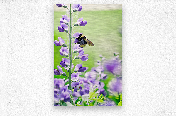 Bee In Flight 2  Metal print