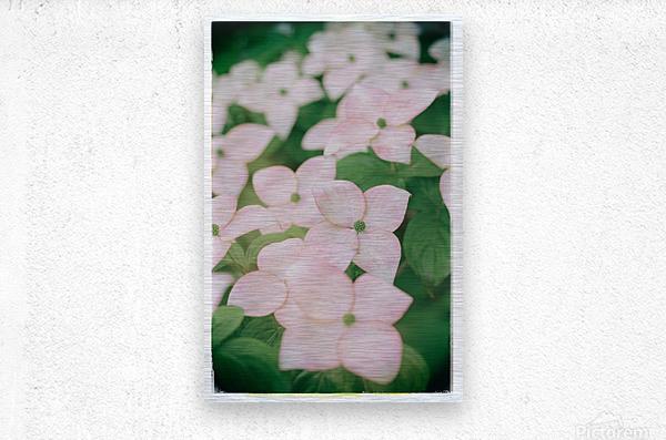 Sea of Pink  Metal print