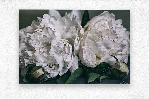 Two Peonies  Metal print