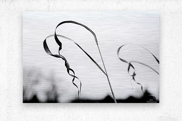 Thin Lines  Metal print