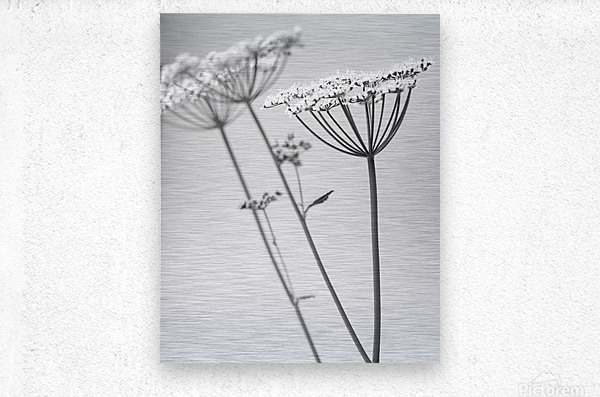 In Black & White  Metal print