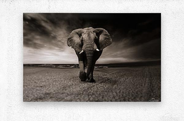 elephant animal africa safari  Metal print