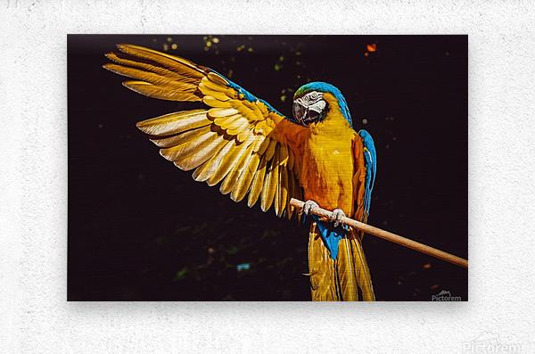 ara parrot yellow macaw bird  Metal print