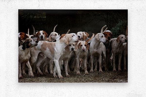 dog herd canine animal pet hounds  Metal print