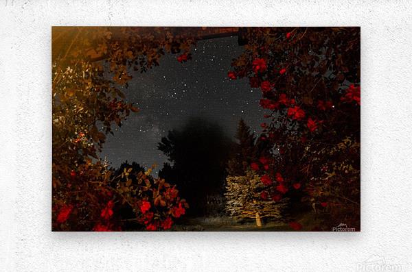 Roses and Stars   Metal print