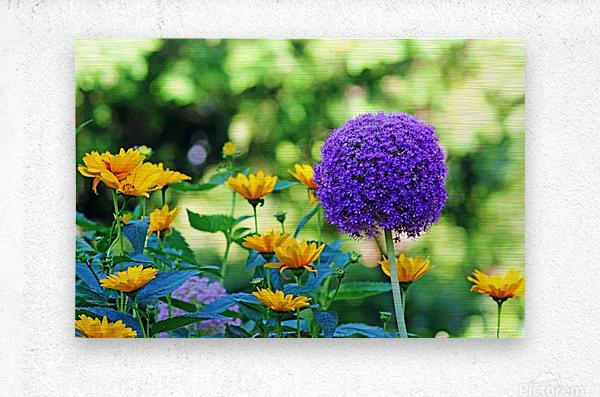 Allium And Wild Sunflowers  Metal print
