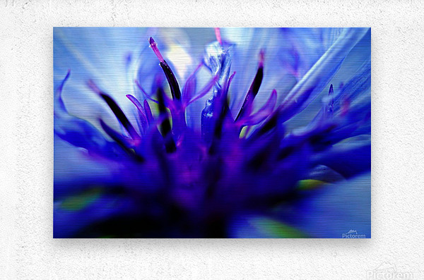 Abstract Pop Color Flower Photography 01  Metal print
