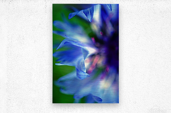 Abstract Pop Color Flower Photography 16  Metal print