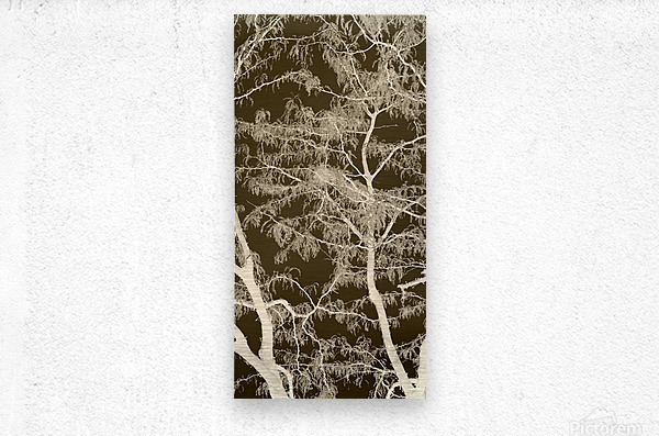 Lacey Sepia Tree middle  Metal print