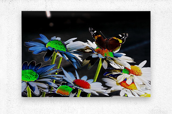 Couleurs en nature  Metal print