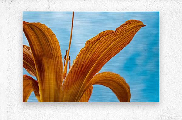 Orange Iris 3  Metal print