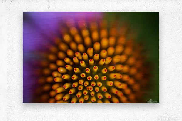 Flower Abstract  Metal print