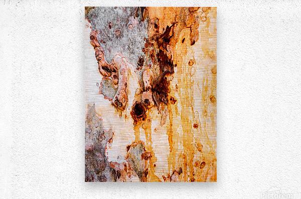 Ghost Gum Bark - 4  Metal print