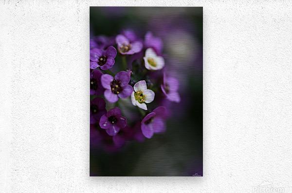 Flower Ball Allysium Flowers  Metal print