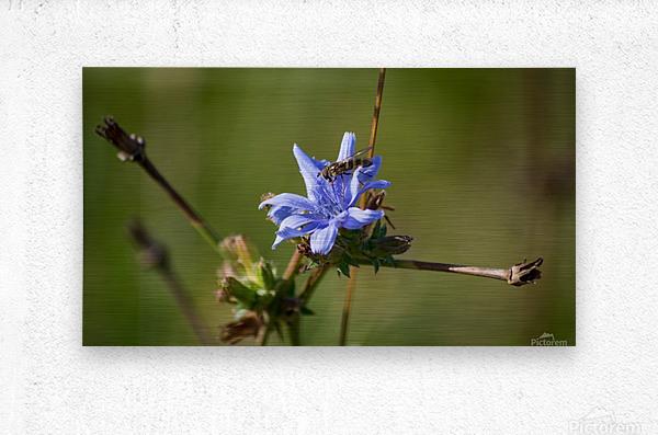 Flowers_  Metal print