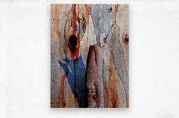 Murray Gum Tree Bark 5  Metal print