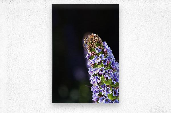 Veronica Flower Delight  Metal print