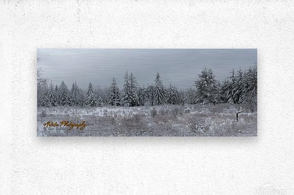 Treeline  Metal print