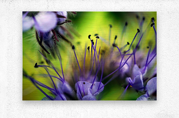 Abstract Pop Color Flower Photography 17  Metal print