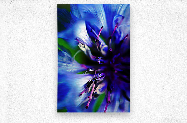 Abstract Pop Color Flower Photography 21  Metal print