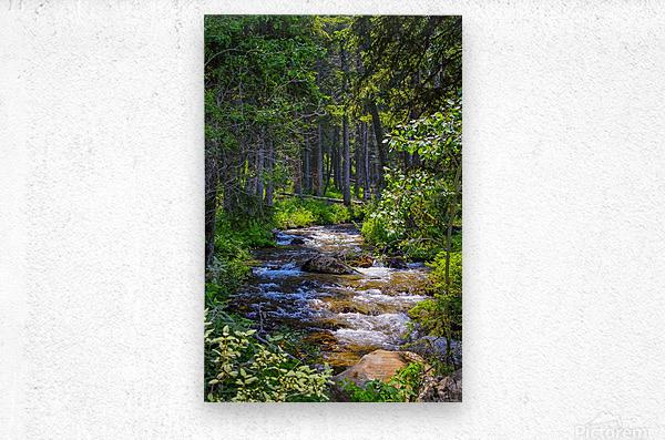 Fairy Creek  Metal print