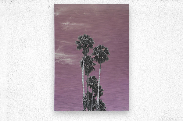 Palm trees in summer  Metal print