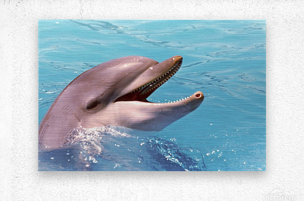 Happy Dolphin Photograph  Metal print
