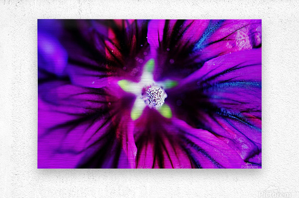 Abstract Pop Color Flower Photography 38  Metal print