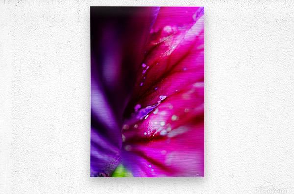 In between colorful flowers  Metal print