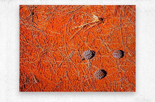 Seeds of the Desert  Metal print
