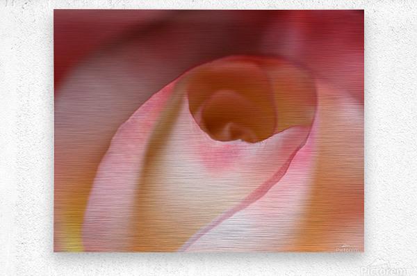 Intimate Rose  Metal print