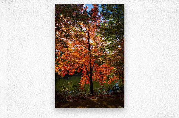 A fall colors tree  Impression metal