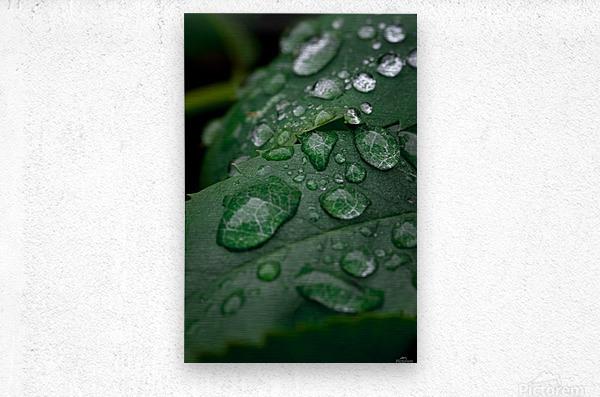 After rain  Metal print