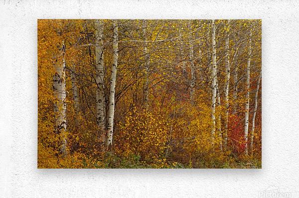 Oil Painting  Metal print