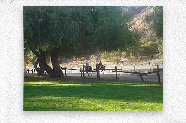 Horses at the park summertime   Metal print