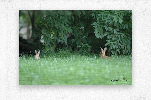 Bunnies Two  Metal print