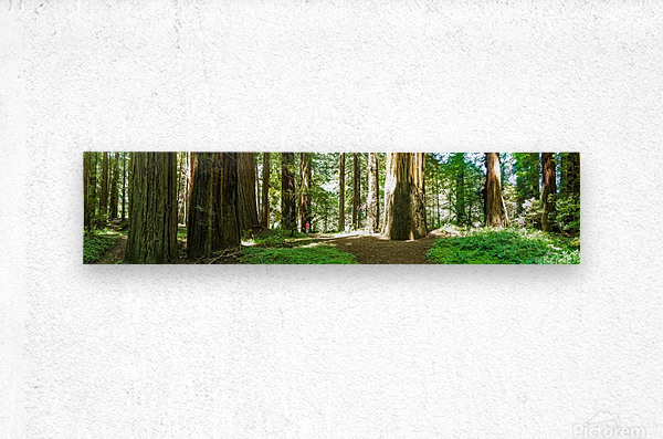 Redwood National Park  Metal print