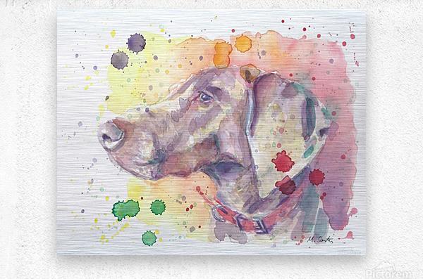 Weimaraner Dog - Portrait of Nandi  Metal print
