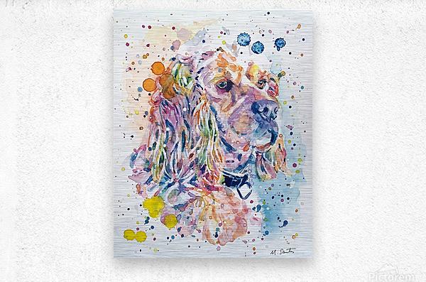 Cocker Spaniel Dog - Portrait of Charlie  Metal print