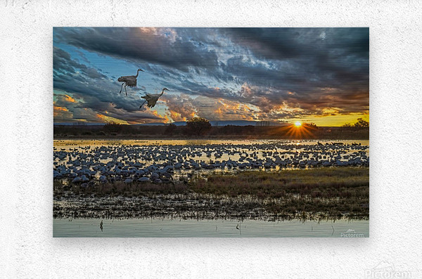 Sunrise at the Bosque  Metal print