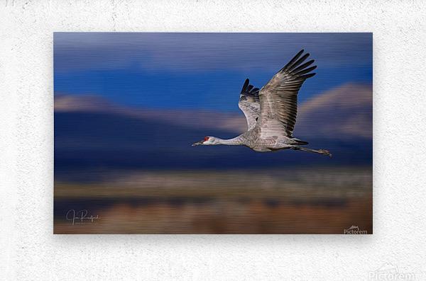 Crane over the Bosque  Metal print
