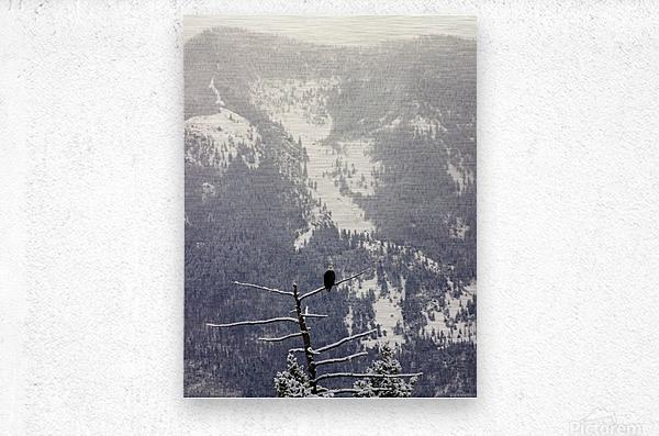 Snowy  Metal print