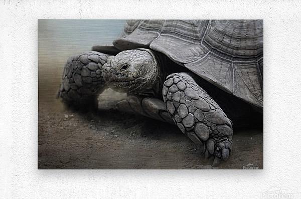 Galapagos Gentle Giant   Metal print