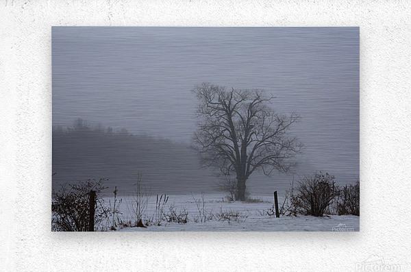 Tree in the Mist  Metal print