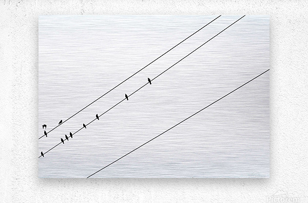 Starlings in Black and White  Metal print