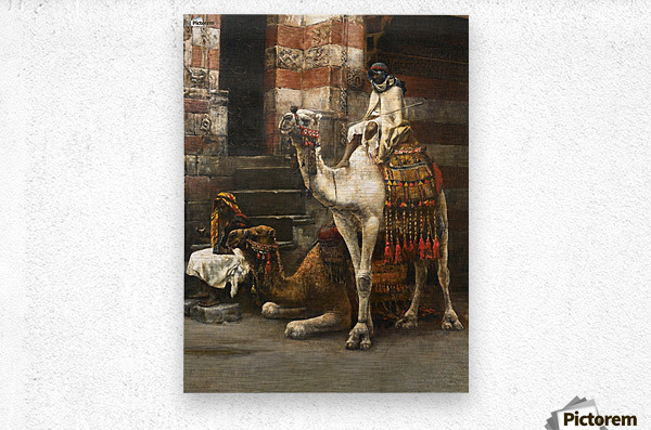Camels on Cairo street  Metal print