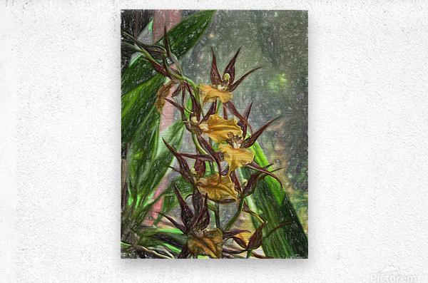 Hawaiian Orchids Color Pencil   Metal print