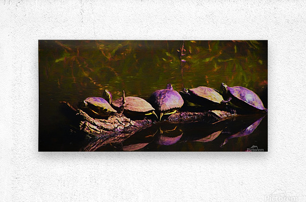 Freshwater Turtles Watercolor  Metal print