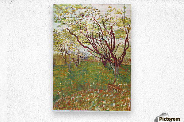Cherry Tree by Van Gogh  Metal print