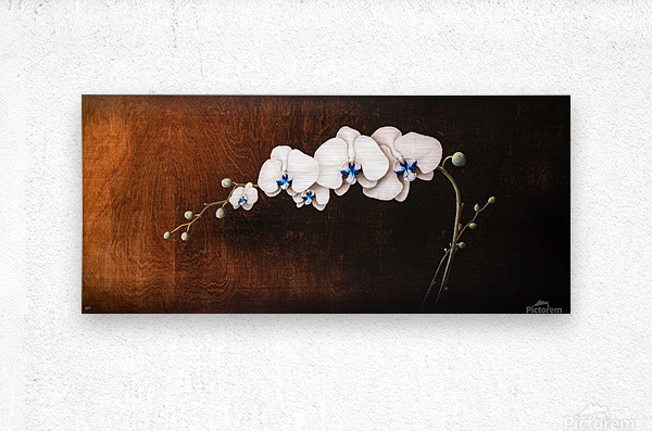 Orchids and Moonlight  Metal print